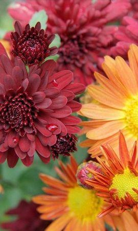 43350 télécharger le fond d'écran Plantes, Fleurs - économiseurs d'écran et images gratuitement