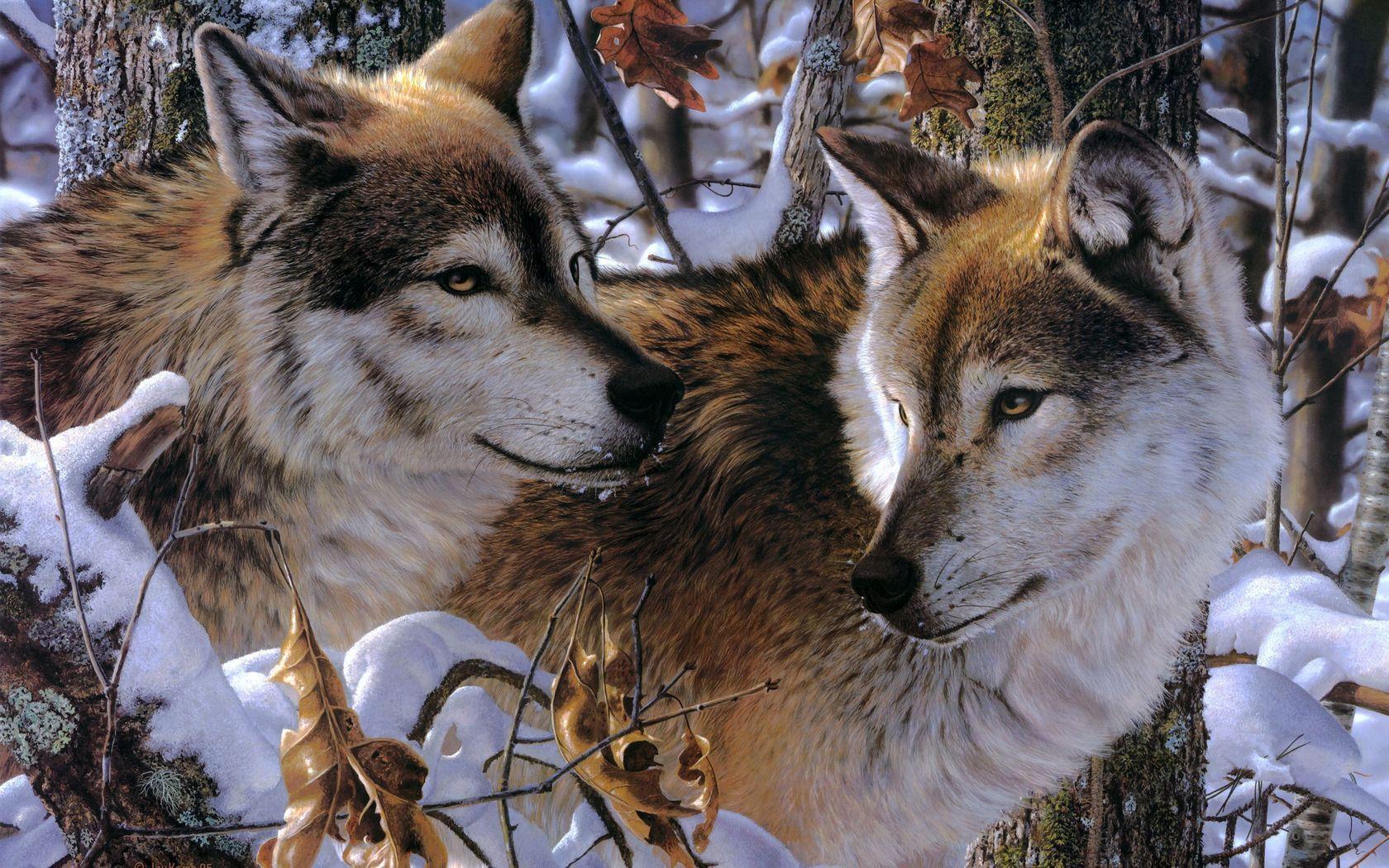 117887 Hintergrundbild herunterladen Wölfe, Tiere, Bäume, Schnee, Paar, Raubtiere, Treue, Anhang, Zuneigung - Bildschirmschoner und Bilder kostenlos