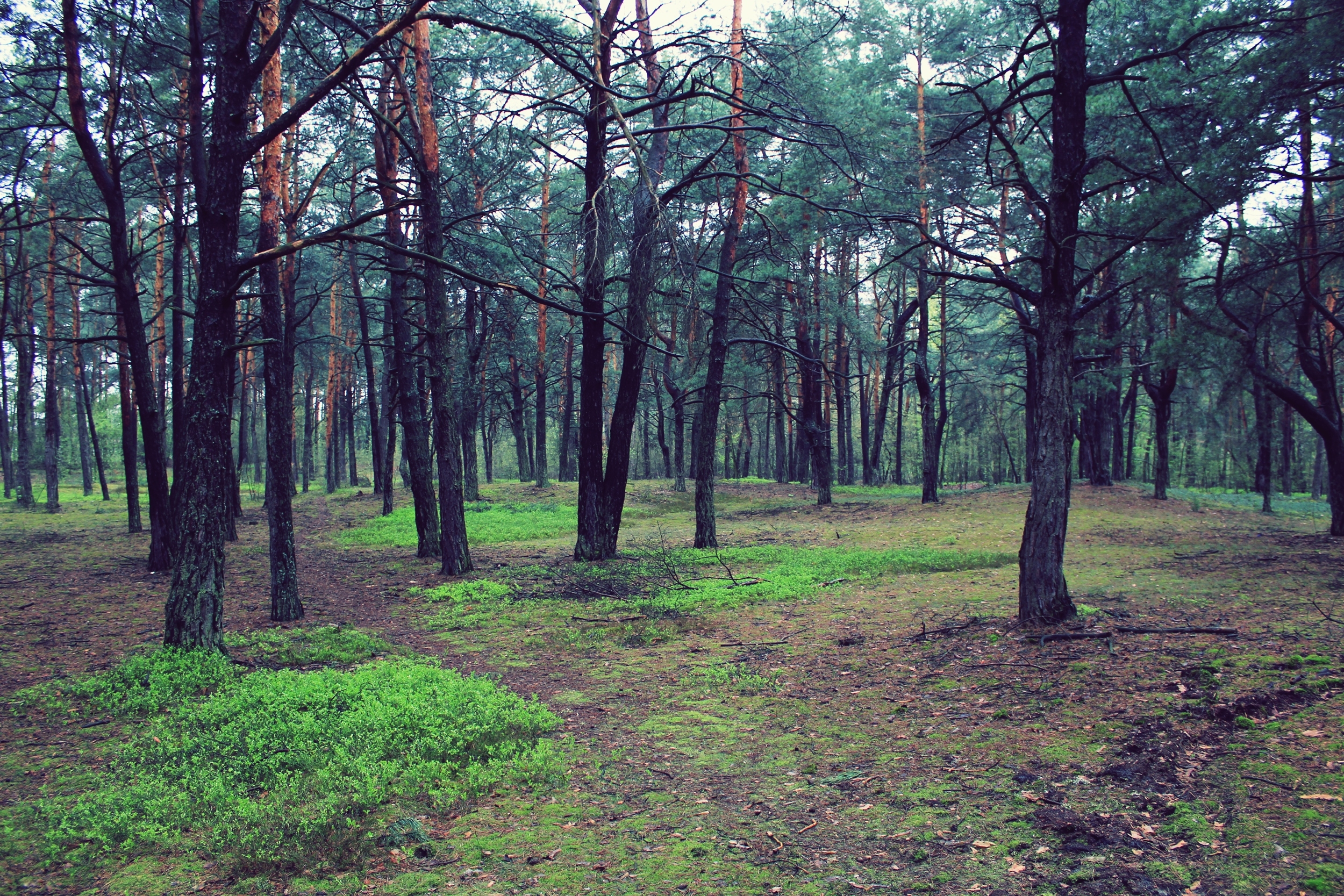 139374 download wallpaper Forest, Trees, Nature, Landscape screensavers and pictures for free