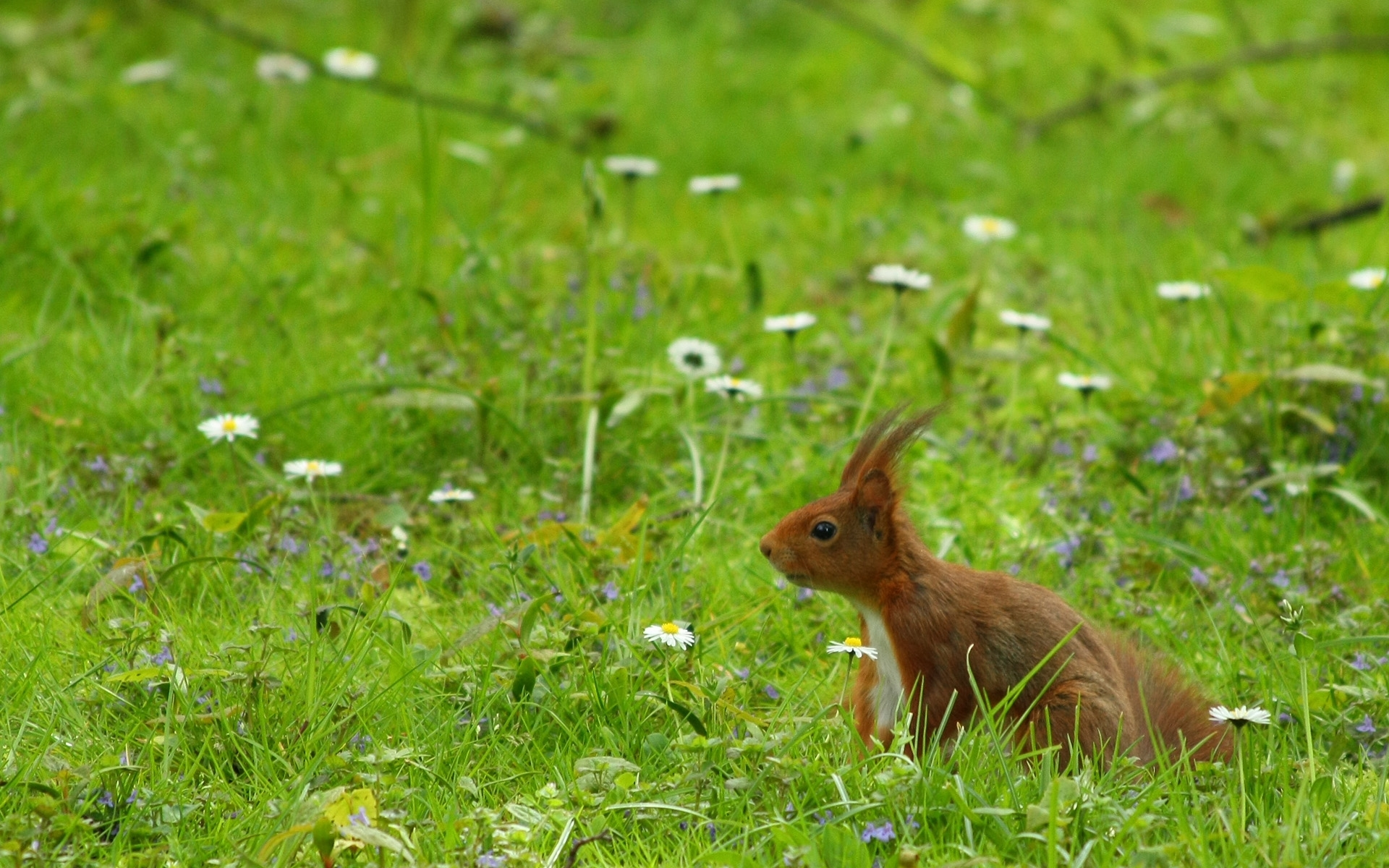 45865 download wallpaper Animals, Squirrel screensavers and pictures for free