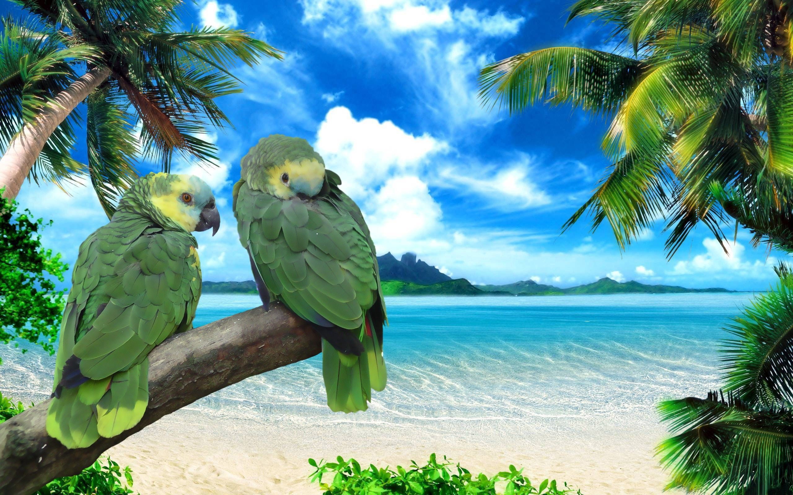 56803 Screensavers and Wallpapers Summer for phone. Download Animals, Sky, Parrots, Sea, Summer, Shore, Bank, Couple, Pair pictures for free