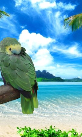 56803 download wallpaper Animals, Parrots, Shore, Bank, Sea, Sky, Summer, Couple, Pair screensavers and pictures for free