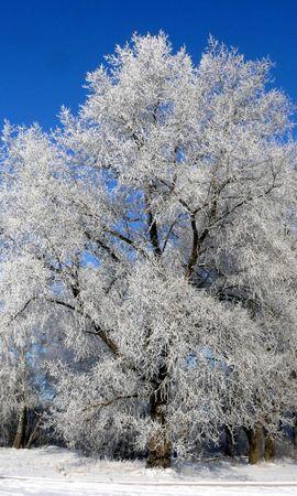 7984 скачать обои Растения, Зима, Деревья, Снег - заставки и картинки бесплатно