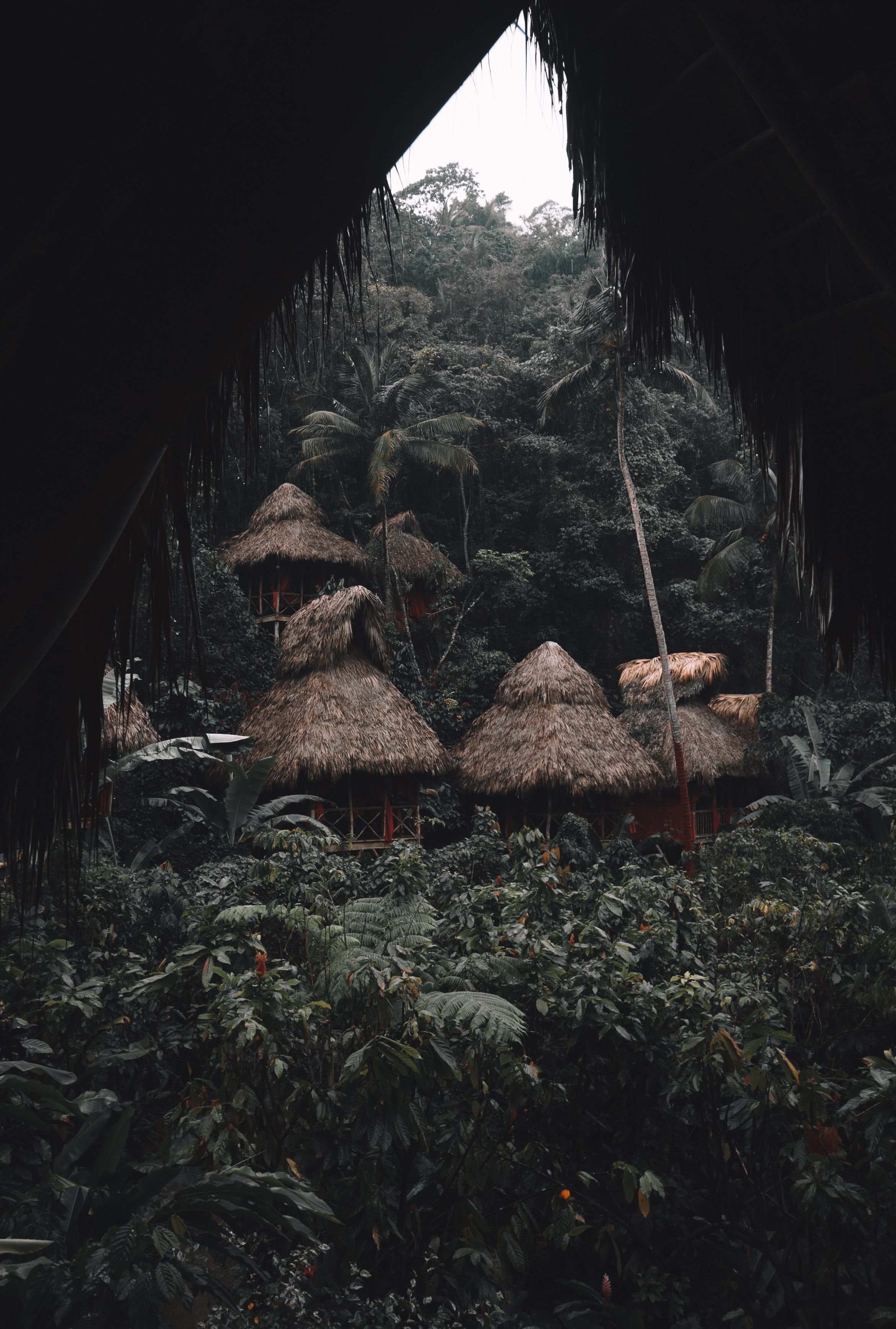 57985 Screensavers and Wallpapers Houses for phone. Download Nature, Jungle, Huts, Small Houses, Houses, Tropics, Palms pictures for free