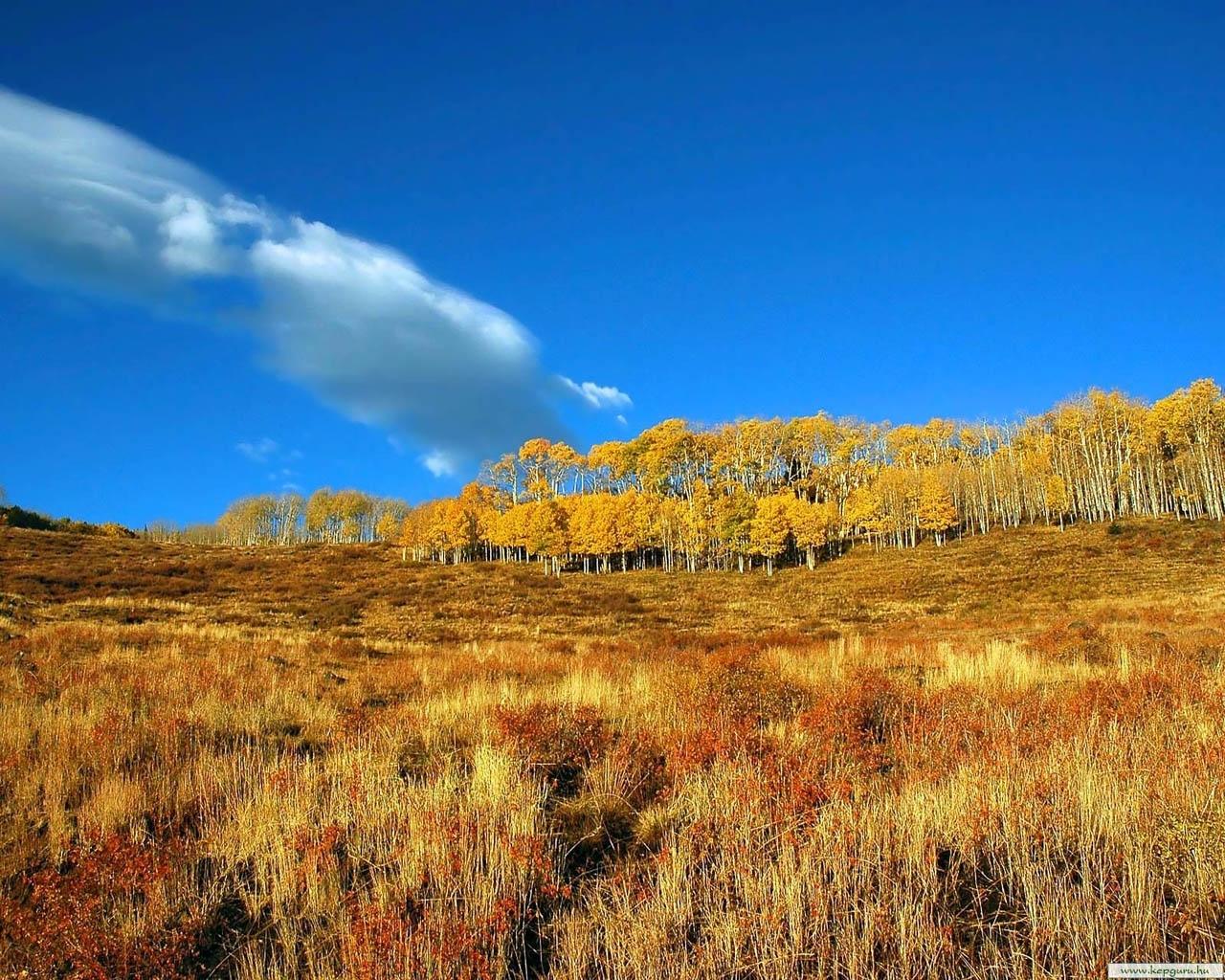 5408 скачать обои Пейзаж, Трава, Поля, Осень - заставки и картинки бесплатно