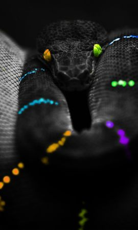 17778 download wallpaper Animals, Background, Snakes screensavers and pictures for free