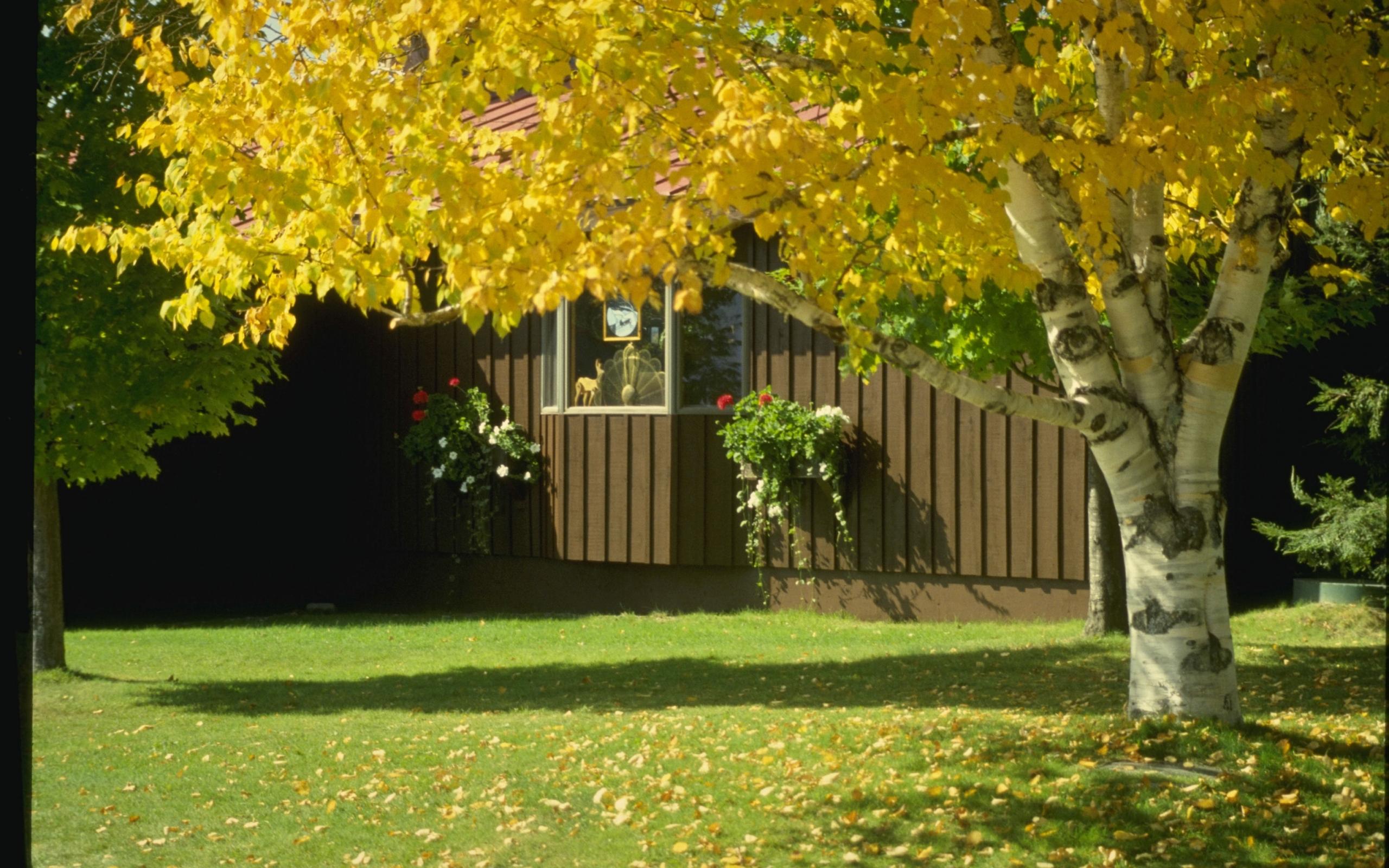 3946 скачать обои Пейзаж, Деревья, Осень - заставки и картинки бесплатно