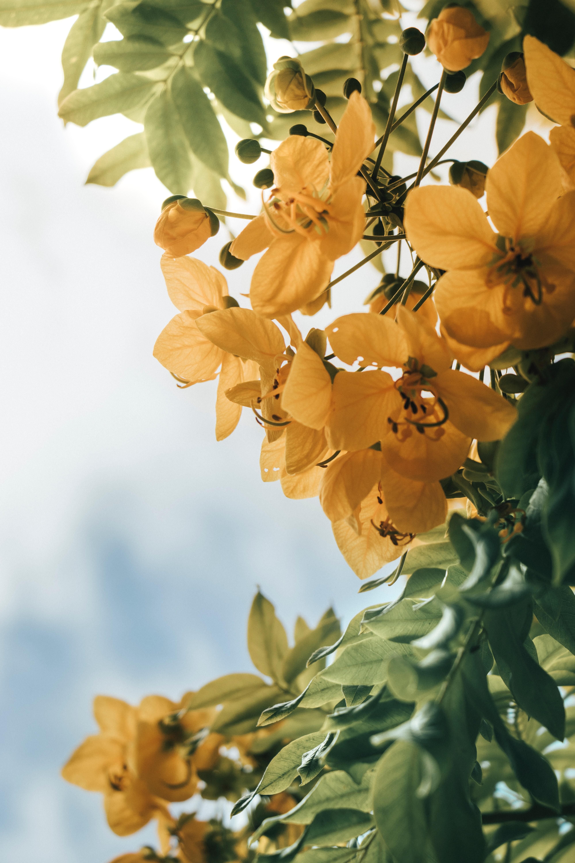 96264 скачать обои Растение, Цветы, Листья, Желтый - заставки и картинки бесплатно