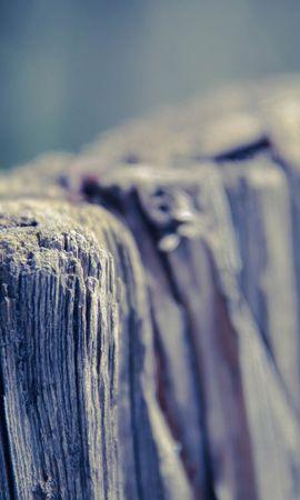 18686 скачать обои Деревья, Фон - заставки и картинки бесплатно
