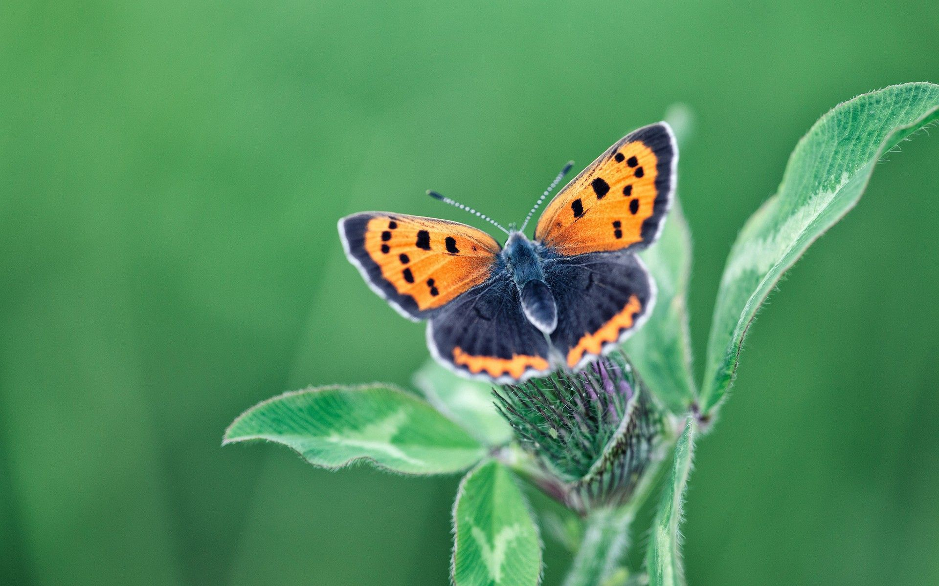 62817 download wallpaper Plant, Macro, Butterfly, Wings screensavers and pictures for free