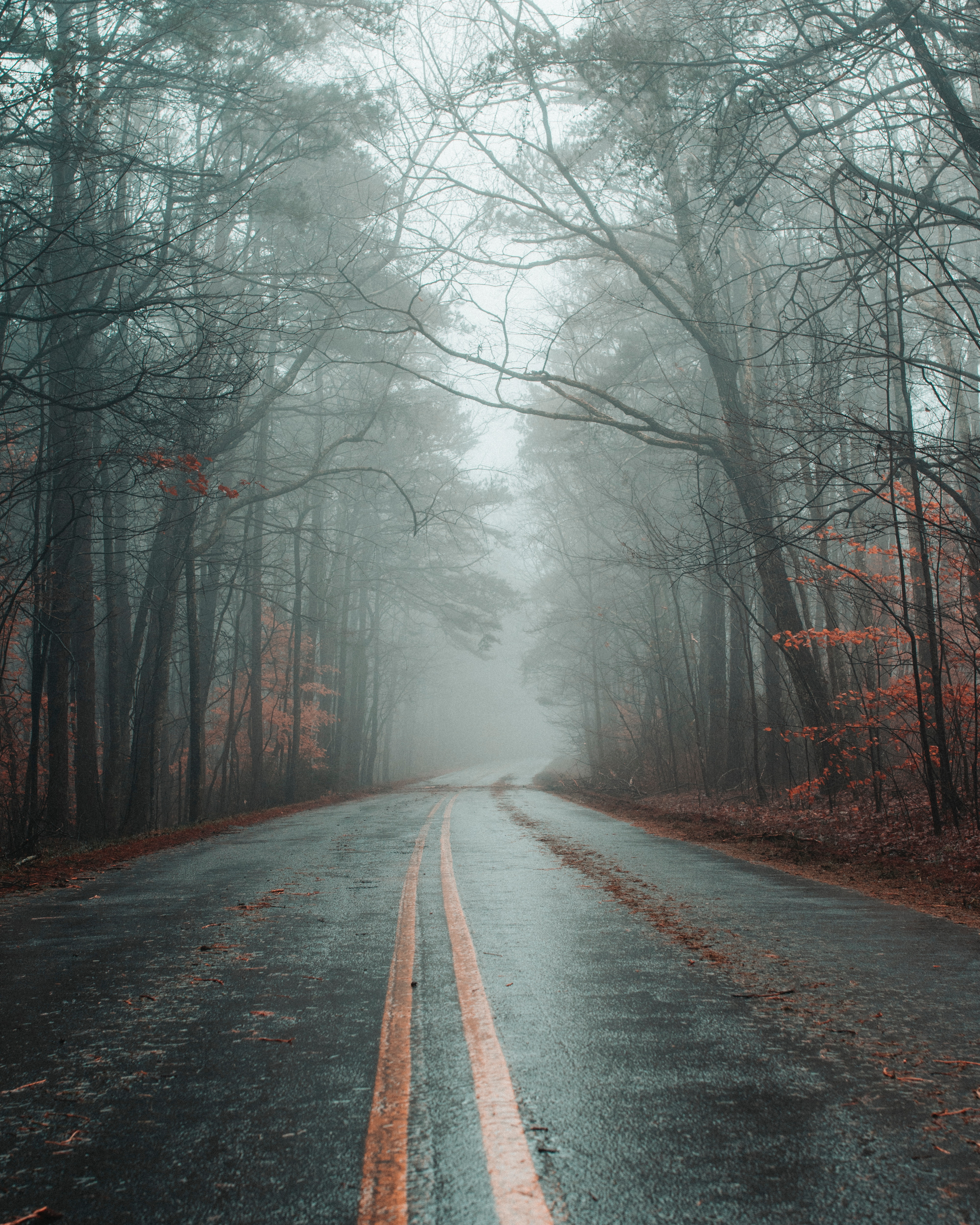 123174 Screensavers and Wallpapers Markup for phone. Download Autumn, Nature, Road, Markup, Forest, Fog, Asphalt pictures for free