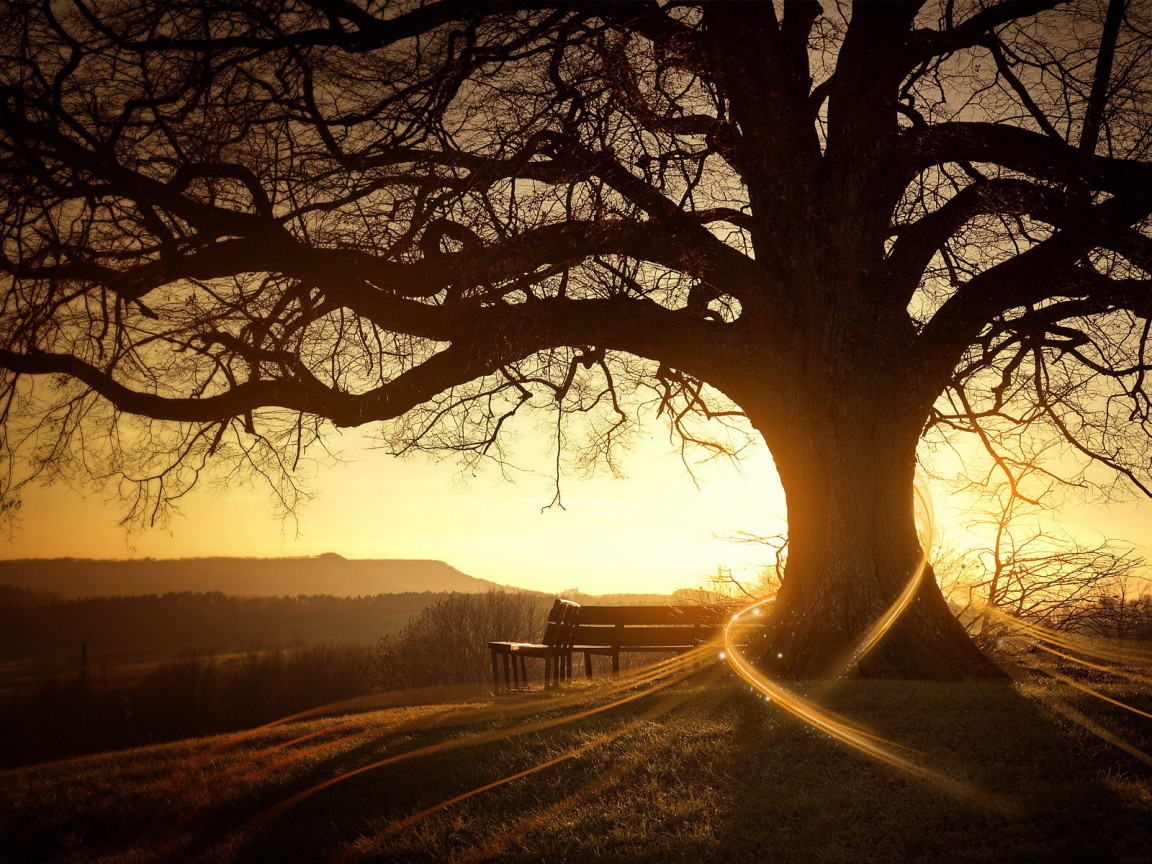 26964 download wallpaper Landscape, Trees, Sunset, Sun screensavers and pictures for free