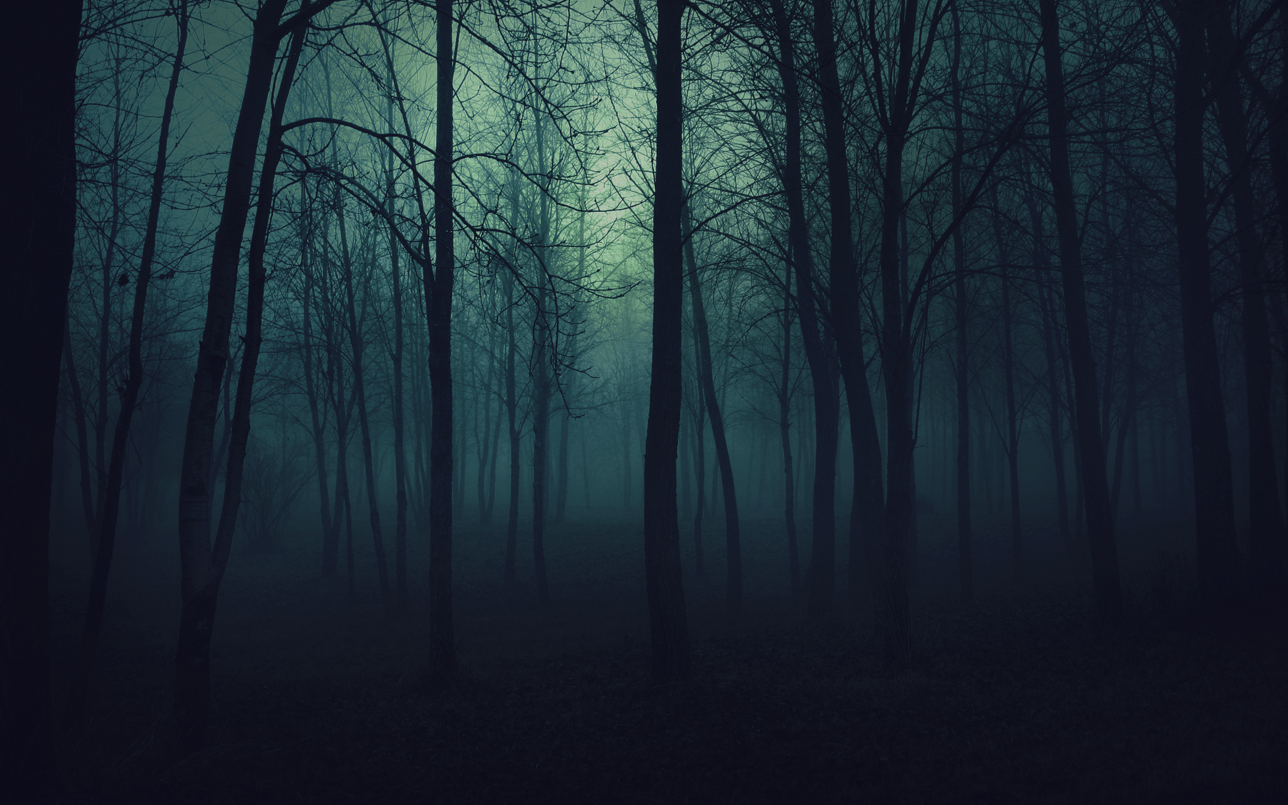 17458 скачать обои Пейзаж, Деревья, Ночь - заставки и картинки бесплатно