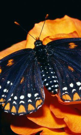 32738 Salvapantallas y fondos de pantalla Insectos en tu teléfono. Descarga imágenes de Mariposas, Insectos gratis