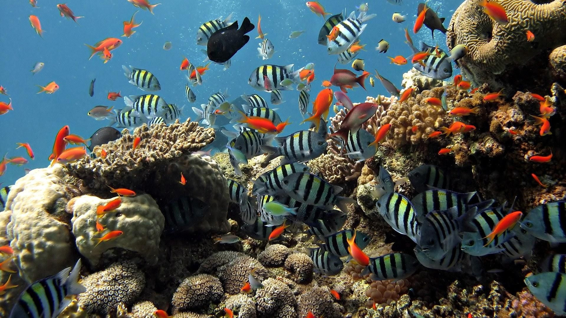 157586 Заставки и Обои Рыбы на телефон. Скачать Рыбы, Животные, Кораллы, Океан, Подводный Мир, Плавать картинки бесплатно