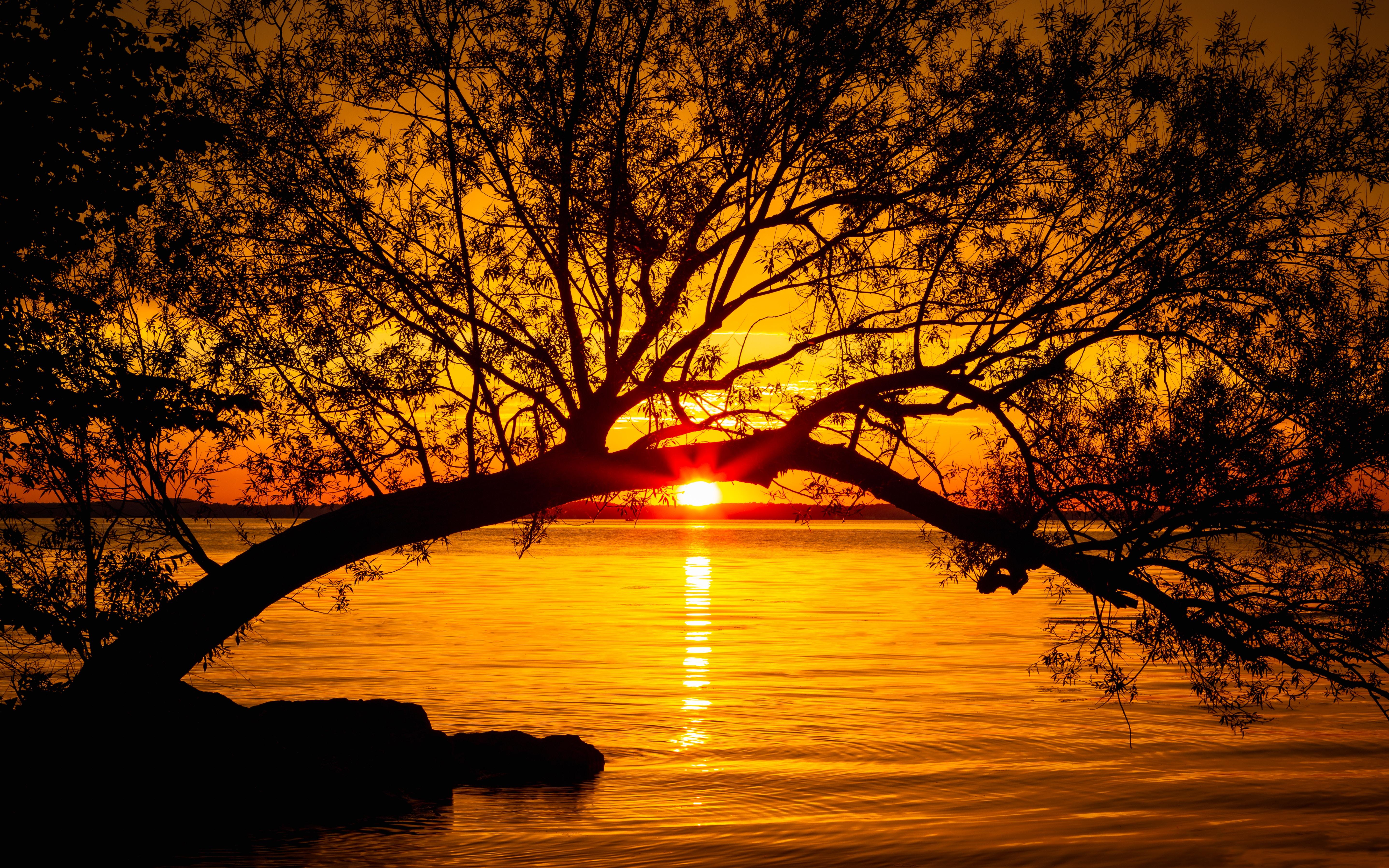 118574 télécharger le fond d'écran Coucher De Soleil, Sun, Nature, Crépuscule, Lac, Bois, Arbre, Lumière Du Soleil, Rayons De Soleil - économiseurs d'écran et images gratuitement