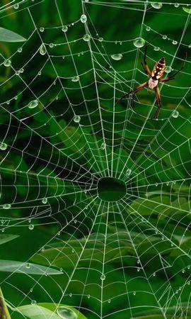 35424 Salvapantallas y fondos de pantalla Insectos en tu teléfono. Descarga imágenes de Insectos, Spiders gratis