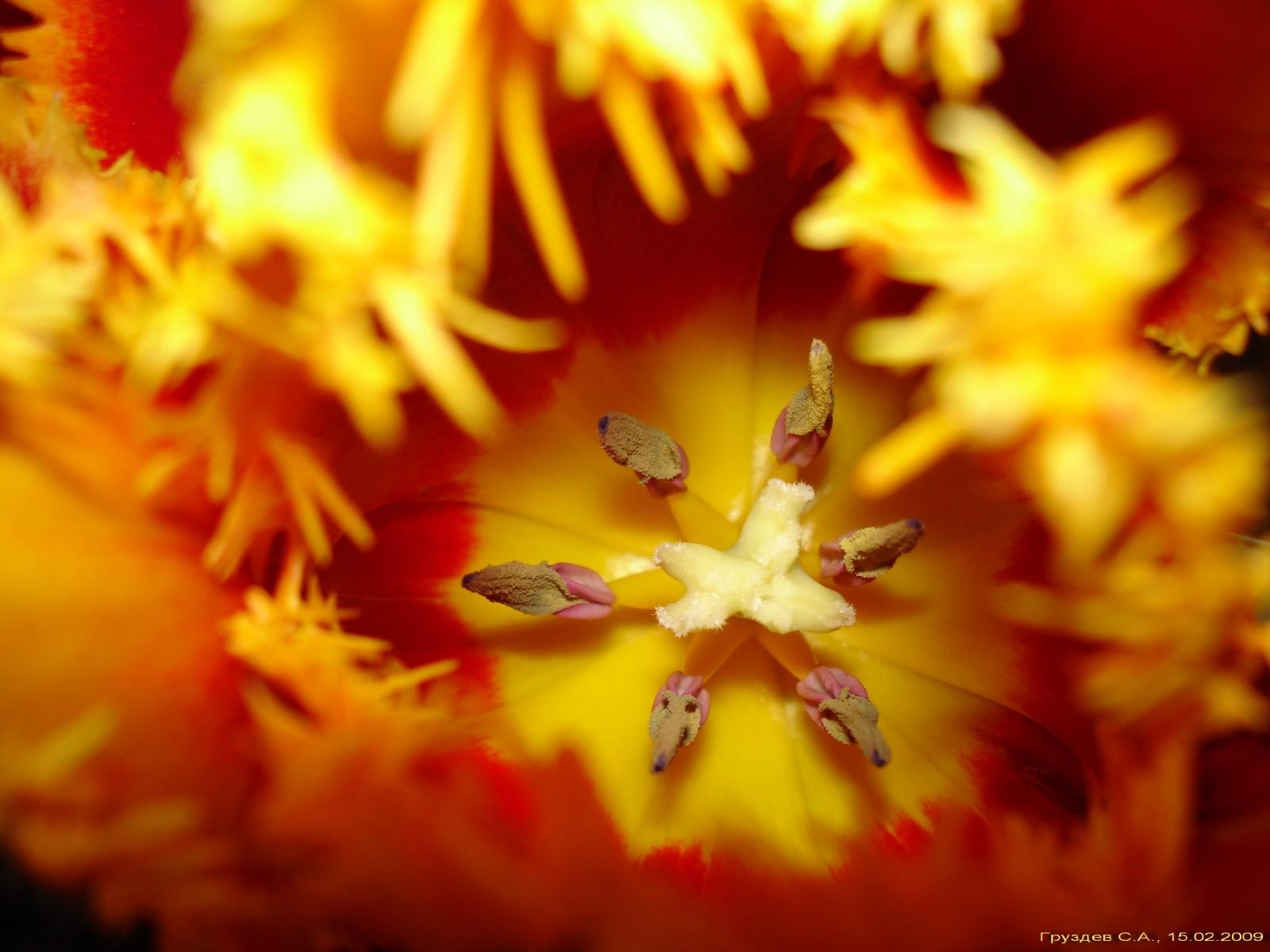 7693 скачать обои Растения, Цветы - заставки и картинки бесплатно