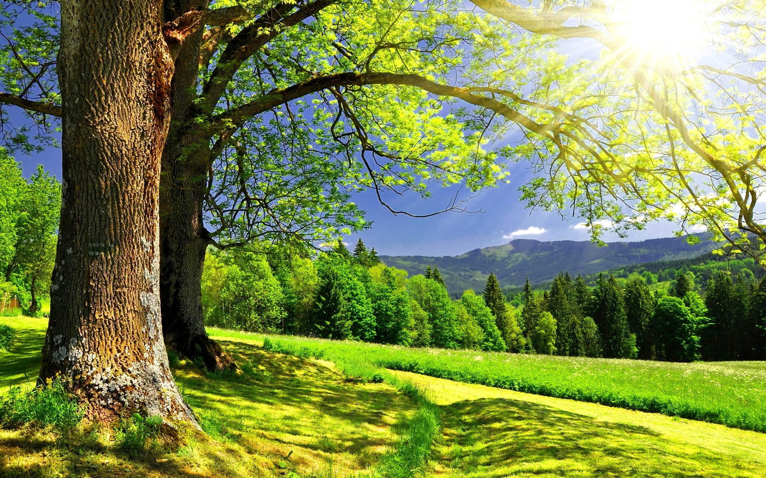 49655 télécharger le fond d'écran Paysage, Nature - économiseurs d'écran et images gratuitement