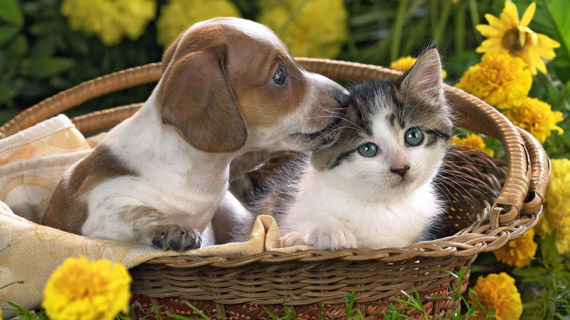 72894 Screensavers and Wallpapers Puppy for phone. Download Animals, Flowers, Friendship, Kitty, Kitten, Puppy, Basket pictures for free
