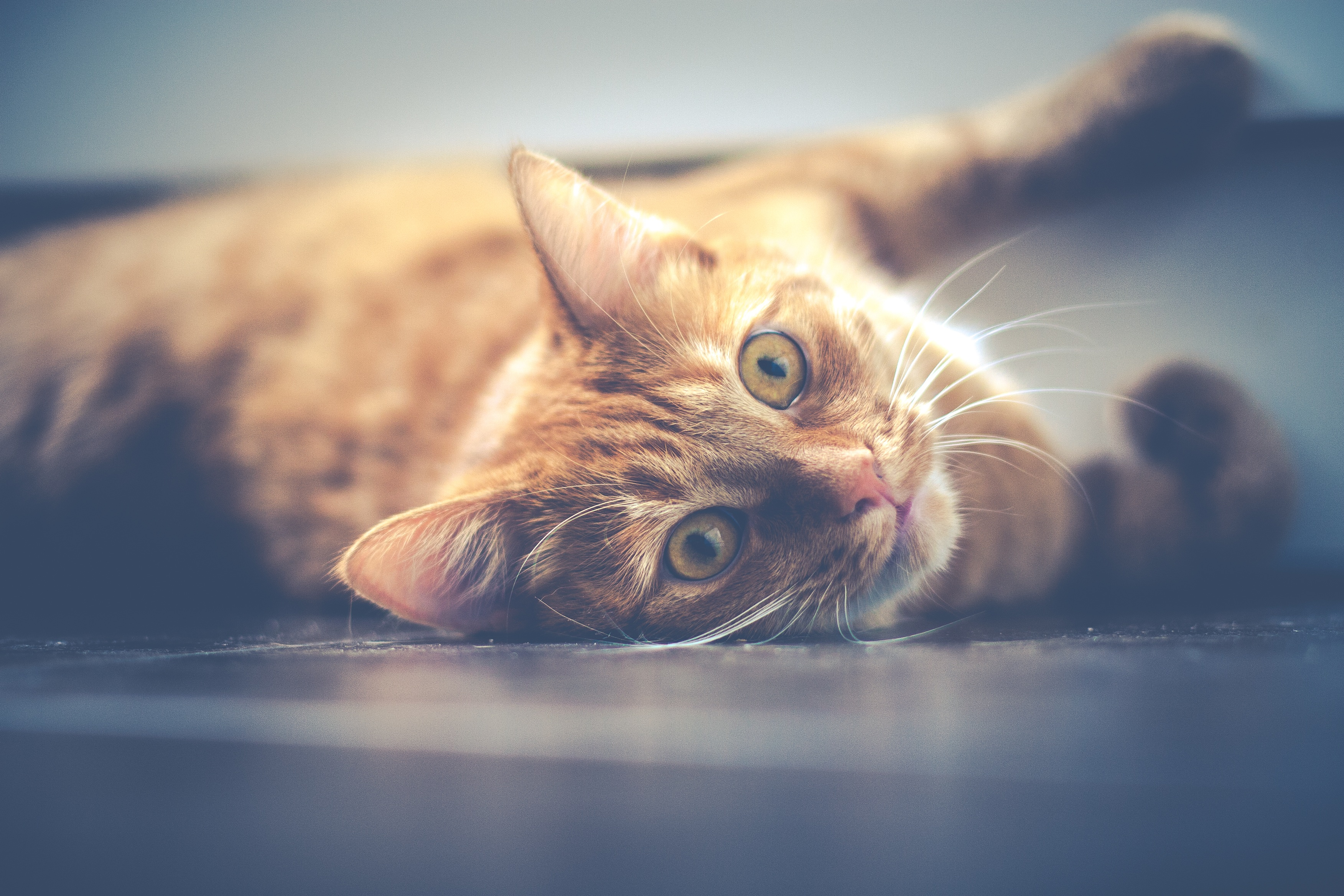 52001 download wallpaper Animals, Cat, Muzzle, Lies, Redhead screensavers and pictures for free