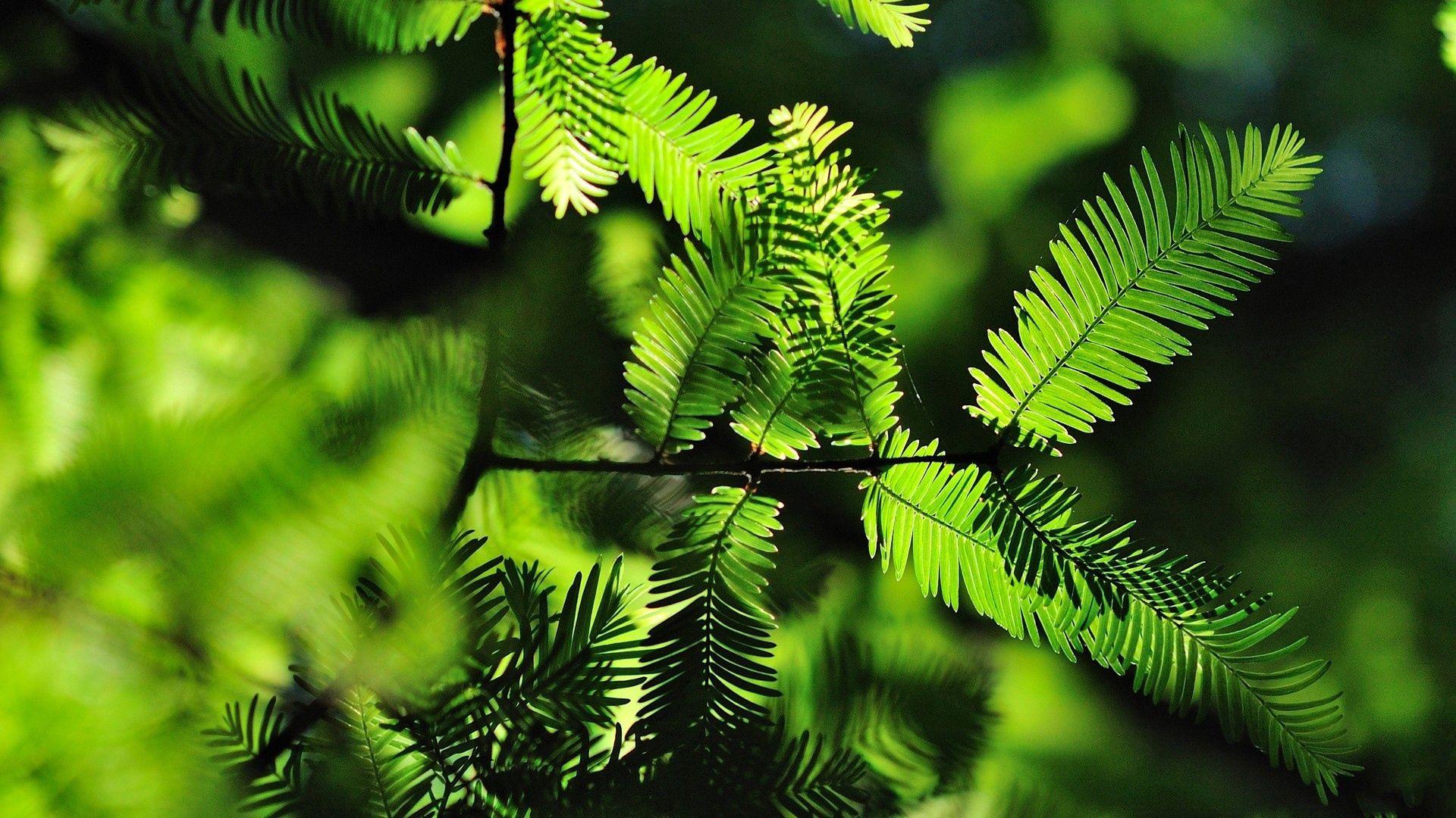 148399 скачать обои Макро, Трава, Деревья, Листья, Тень, Чаща - заставки и картинки бесплатно