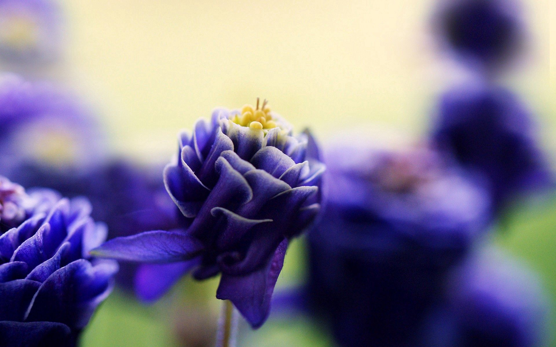 97404 Screensavers and Wallpapers Beautiful for phone. Download Flower, Macro, Petals, Bud, Beautiful pictures for free