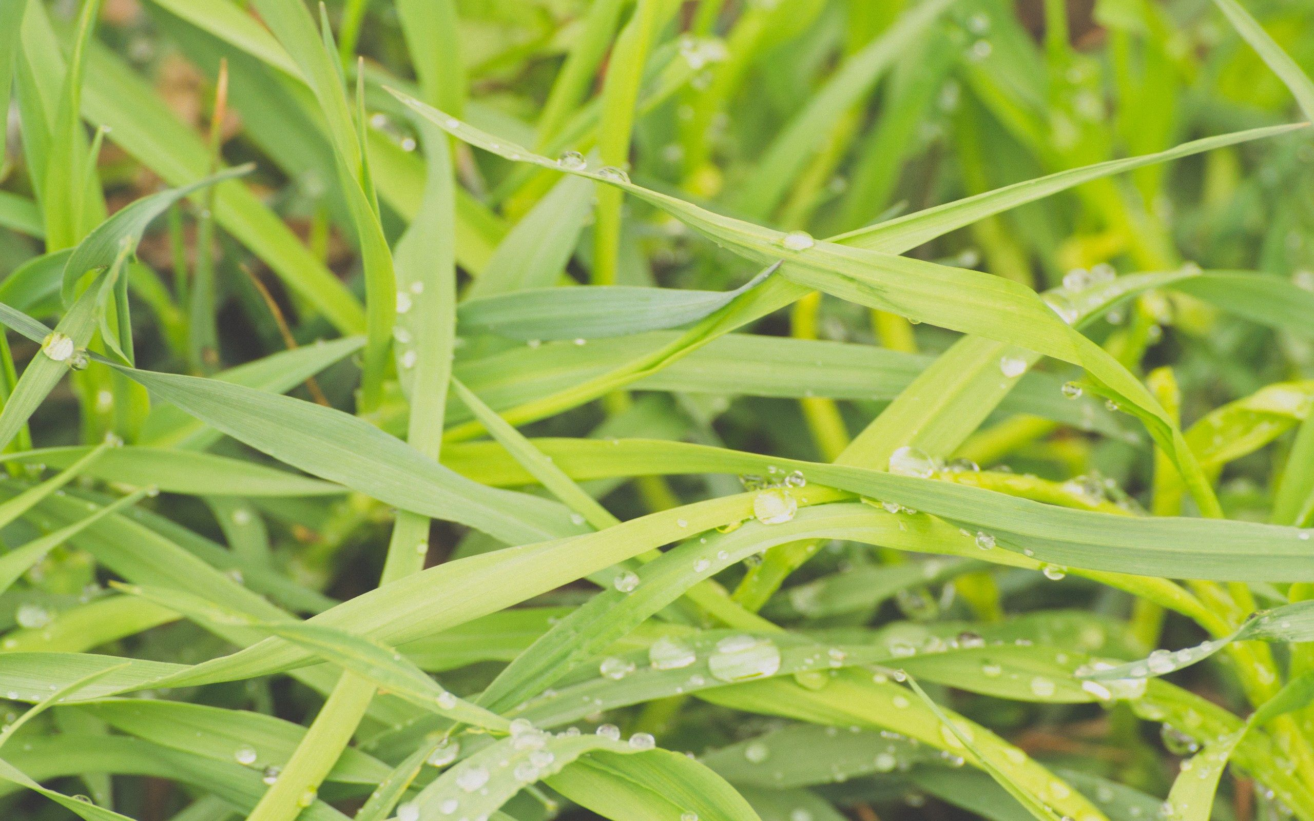 68922 download wallpaper Macro, Grass, Dew, Drops, Wet, Humid screensavers and pictures for free