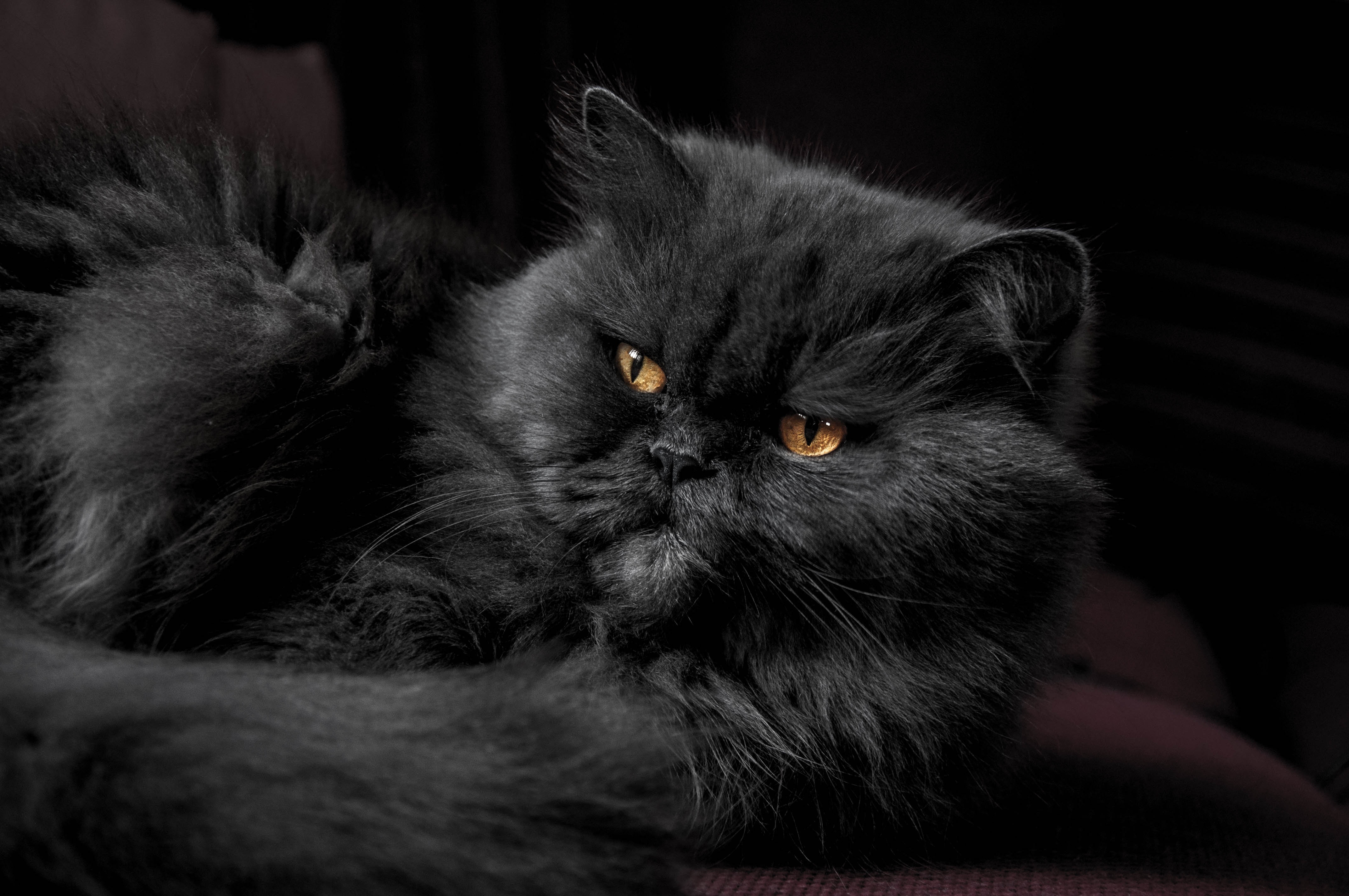 108267 Screensavers and Wallpapers Fluffy for phone. Download Animals, Cat, Fluffy, Grey pictures for free