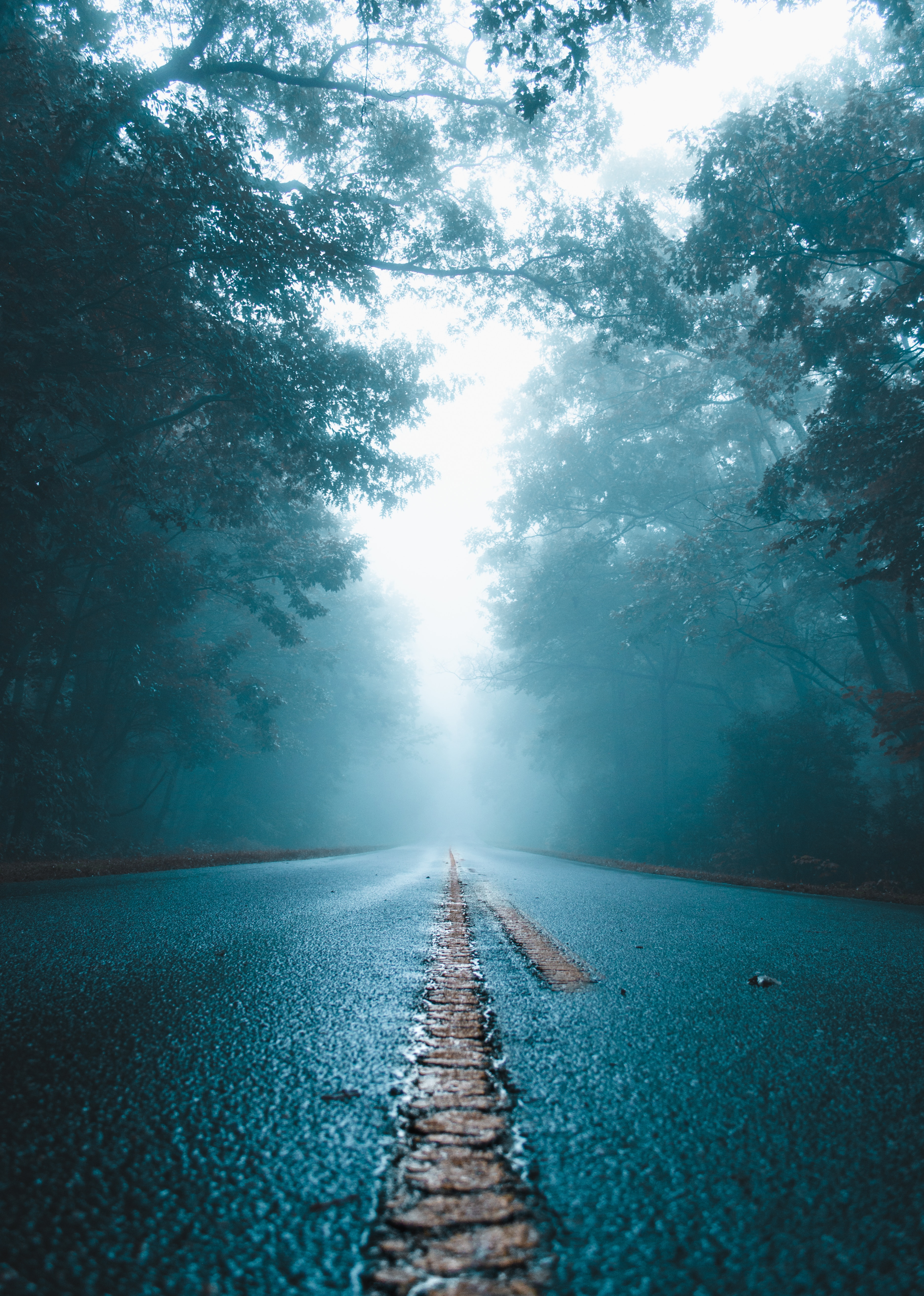 90657 Screensavers and Wallpapers Wet for phone. Download Nature, Trees, Road, Fog, Wet, Asphalt pictures for free