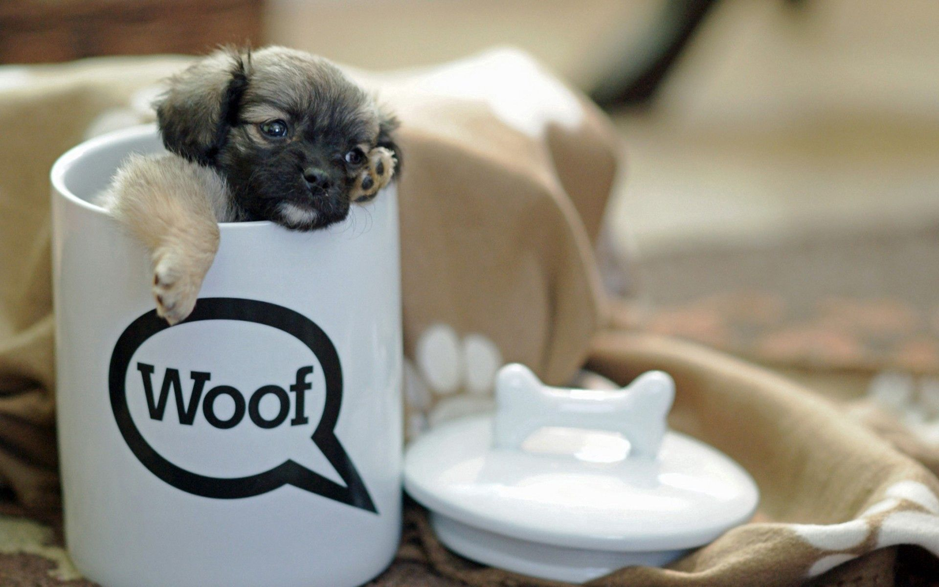 103646 Screensavers and Wallpapers Cup for phone. Download Animals, Cup, Playful, Puppy, Small pictures for free