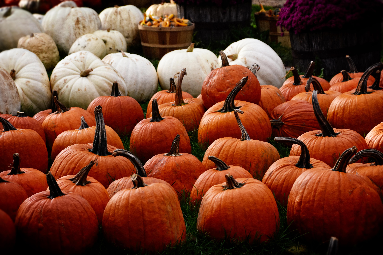 54501 Hintergrundbild herunterladen Herbst, Lebensmittel, Kürbis, Die Ernte, Ernte - Bildschirmschoner und Bilder kostenlos