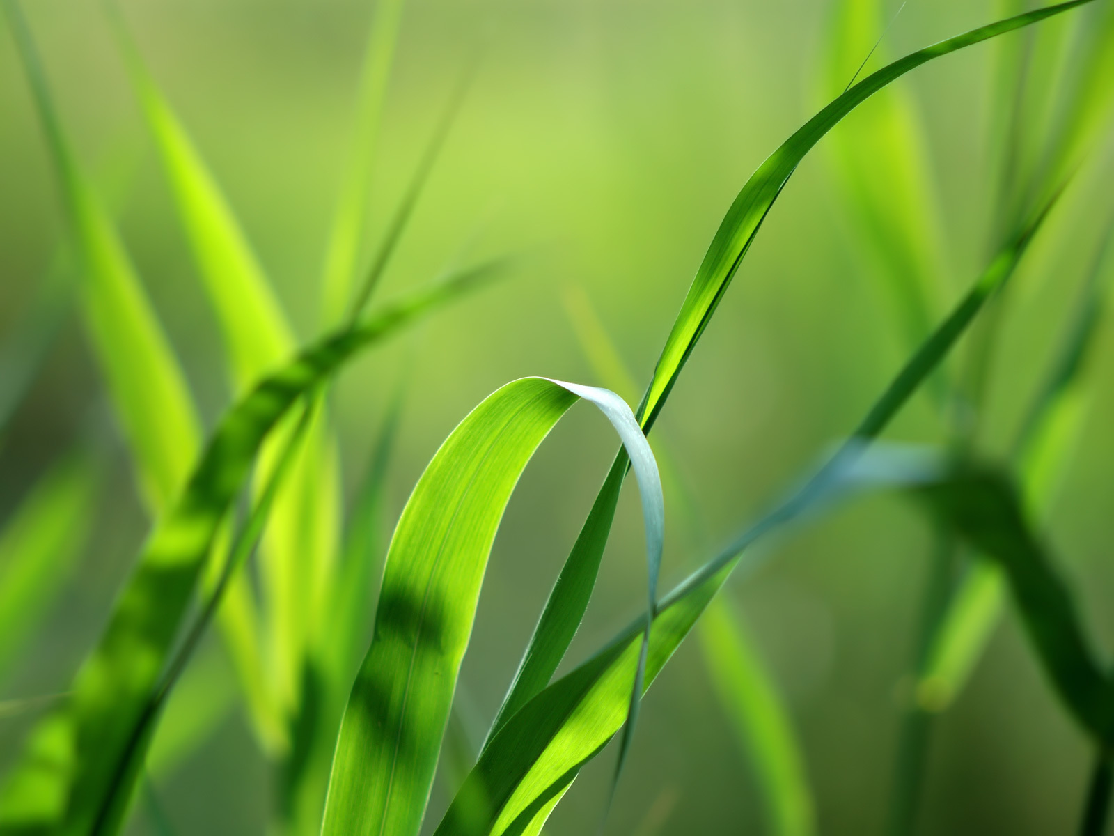 26317 скачать обои Растения, Трава, Фон - заставки и картинки бесплатно
