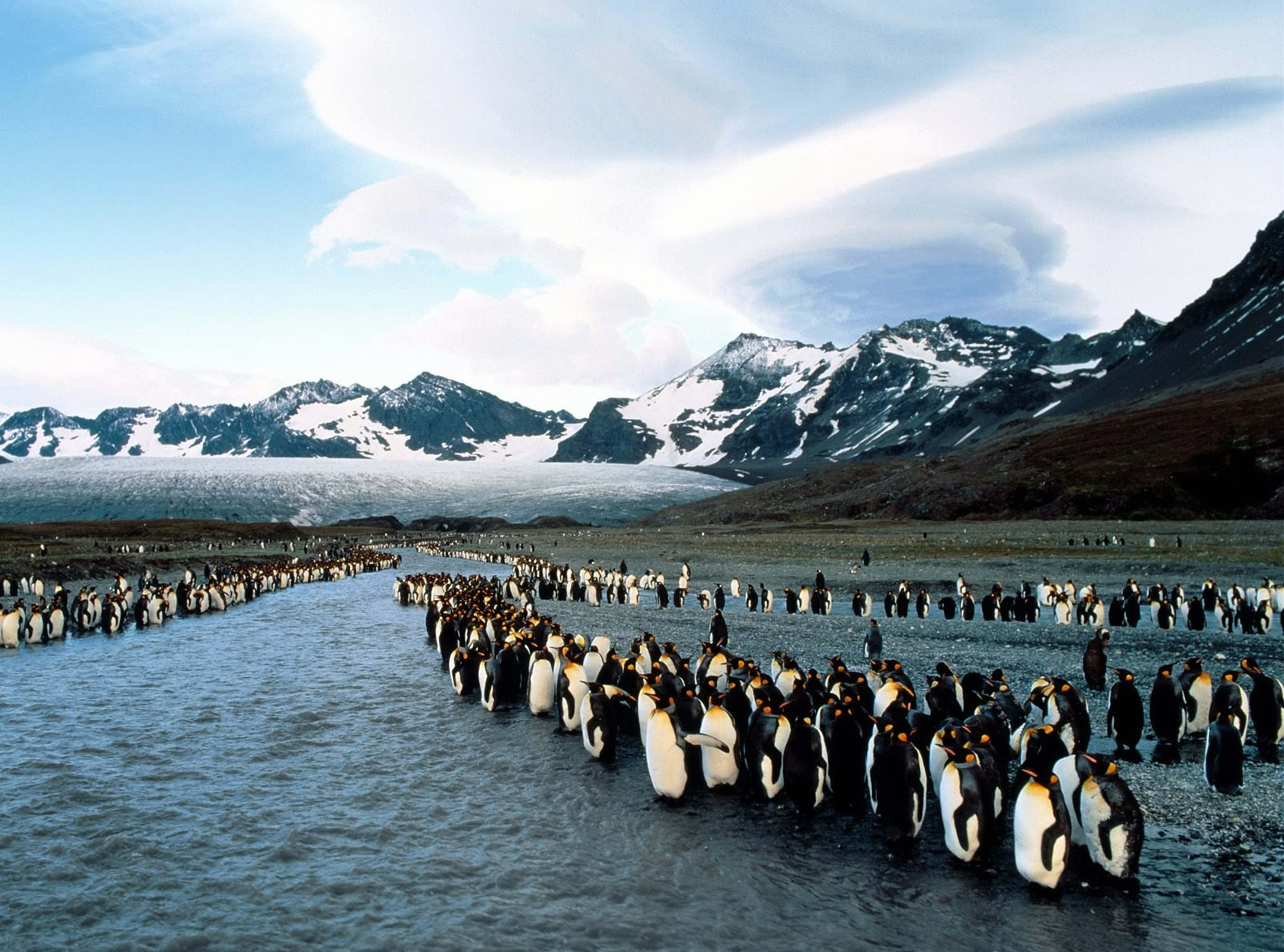 123366 download wallpaper Animals, Pinguins, Mountains, Flock, North, Colony screensavers and pictures for free