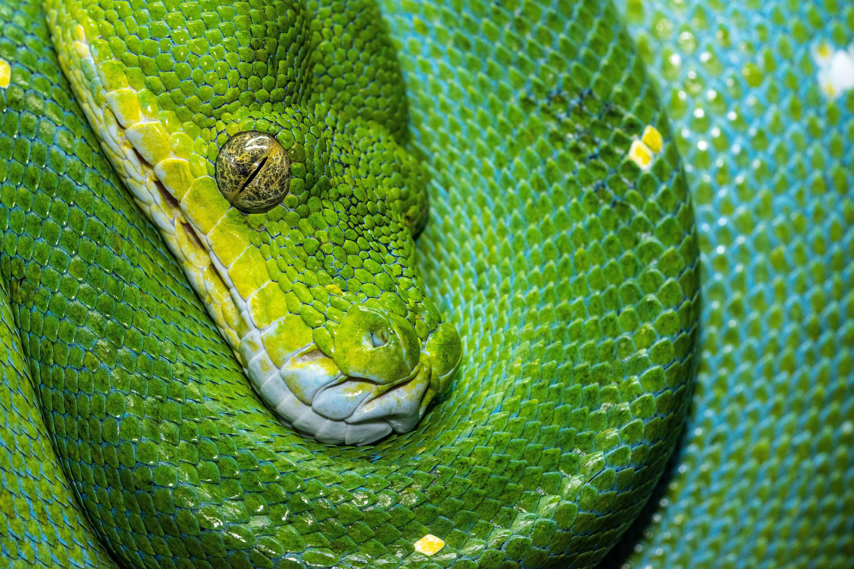 84282 скачать обои Животные, Зеленый, Рептилия, Змея, Чешуя - заставки и картинки бесплатно