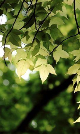 21091 скачать обои Растения, Деревья, Листья - заставки и картинки бесплатно