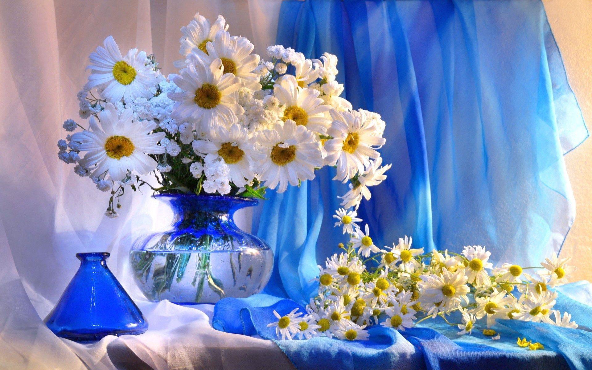 108597 скачать обои Цветы, Ромашки, Ваза, Букет, Оформление - заставки и картинки бесплатно