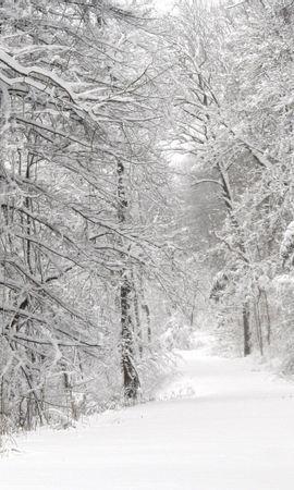 8184 скачать обои Пейзаж, Зима, Природа, Деревья, Дороги, Снег, Елки - заставки и картинки бесплатно