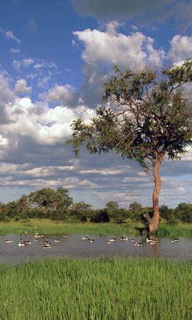 143 скачать обои Пейзаж, Река, Деревья, Небо - заставки и картинки бесплатно