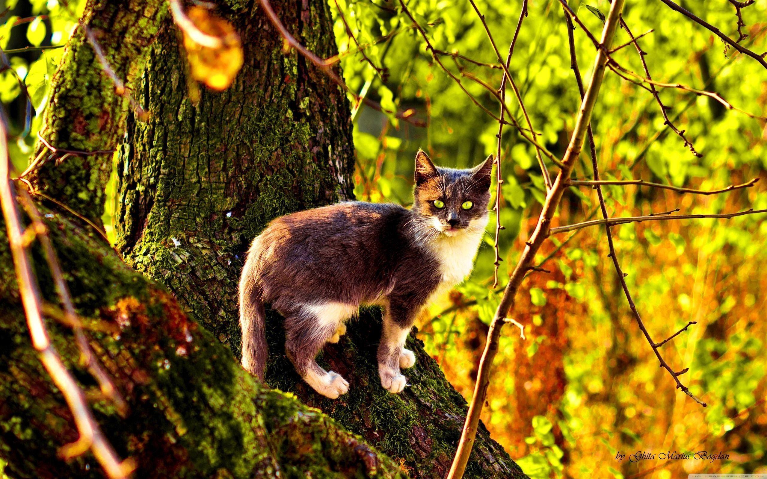 123304 скачать обои Животные, Кот, Дерево, Лазать, Окрас, Осень - заставки и картинки бесплатно