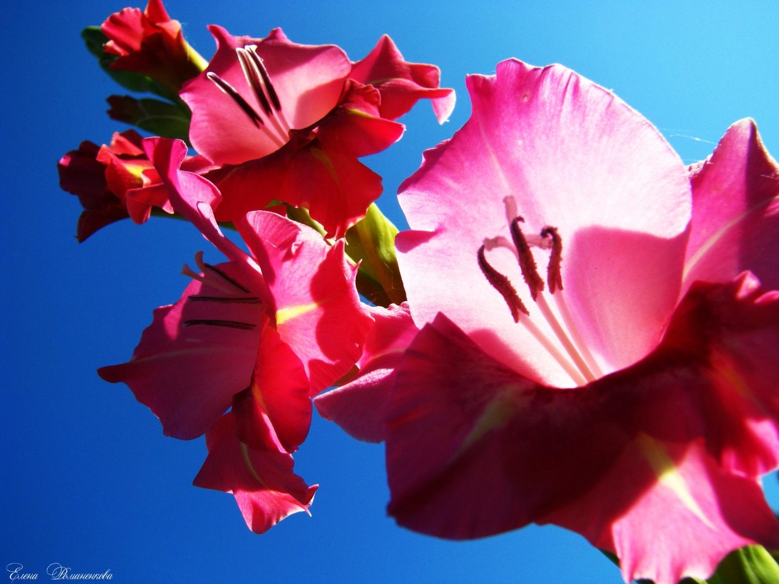 3661 скачать обои Растения, Цветы - заставки и картинки бесплатно