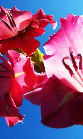 3661 descargar fondo de pantalla Plantas, Flores: protectores de pantalla e imágenes gratis