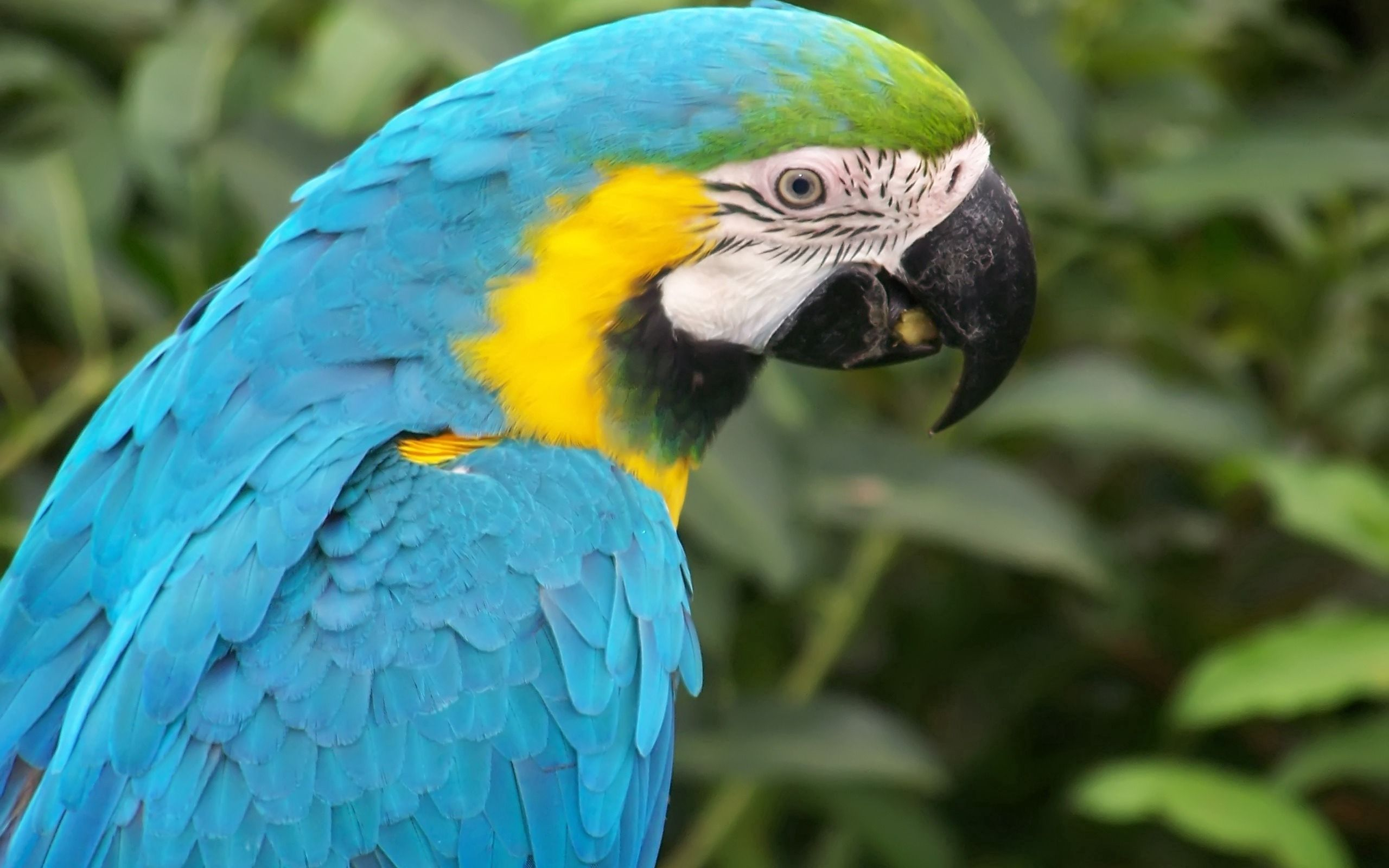 111687 download wallpaper Animals, Parrot, Multicolored, Motley, Beak, Feather screensavers and pictures for free