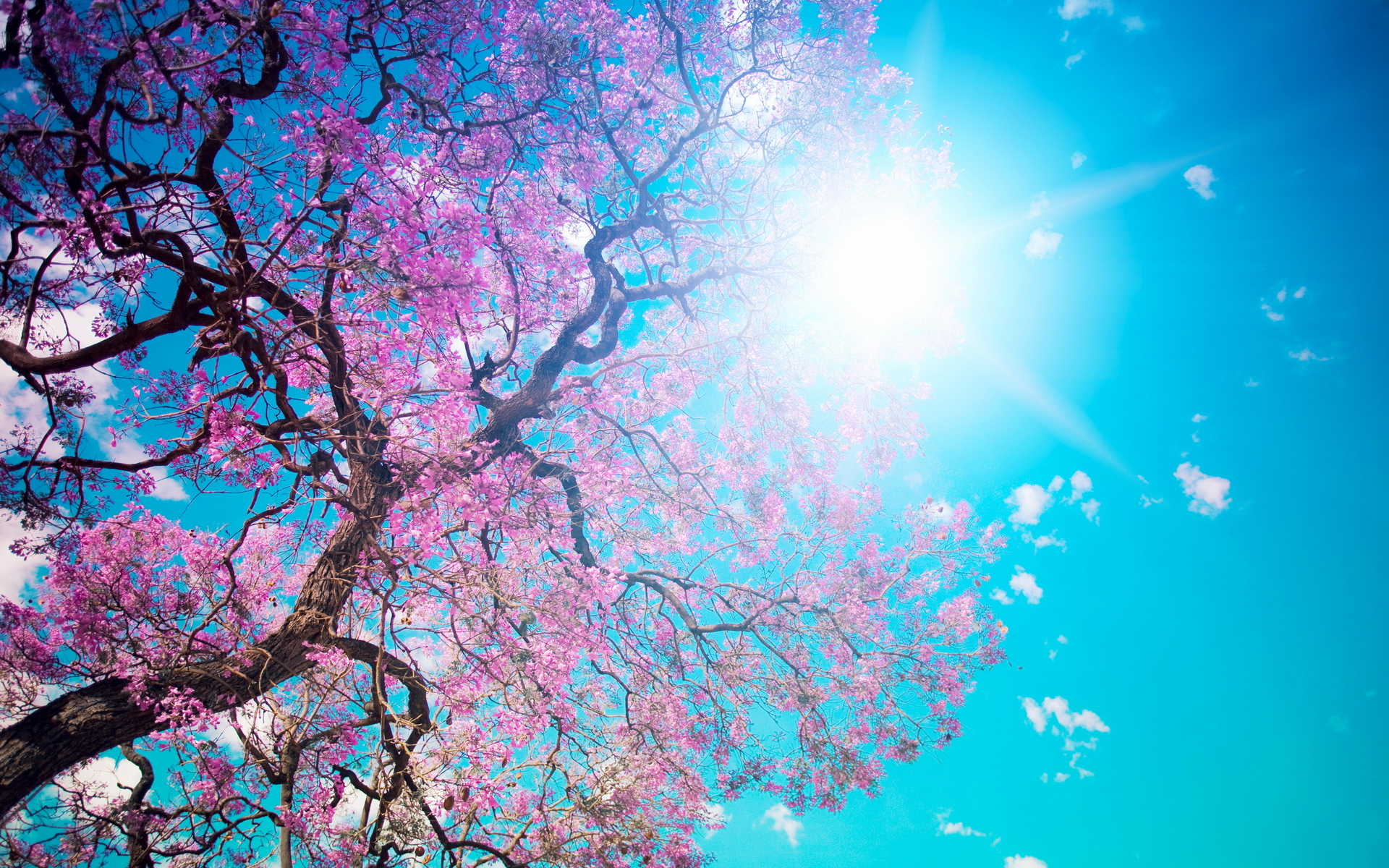 47232 download wallpaper Landscape, Trees, Plants screensavers and pictures for free