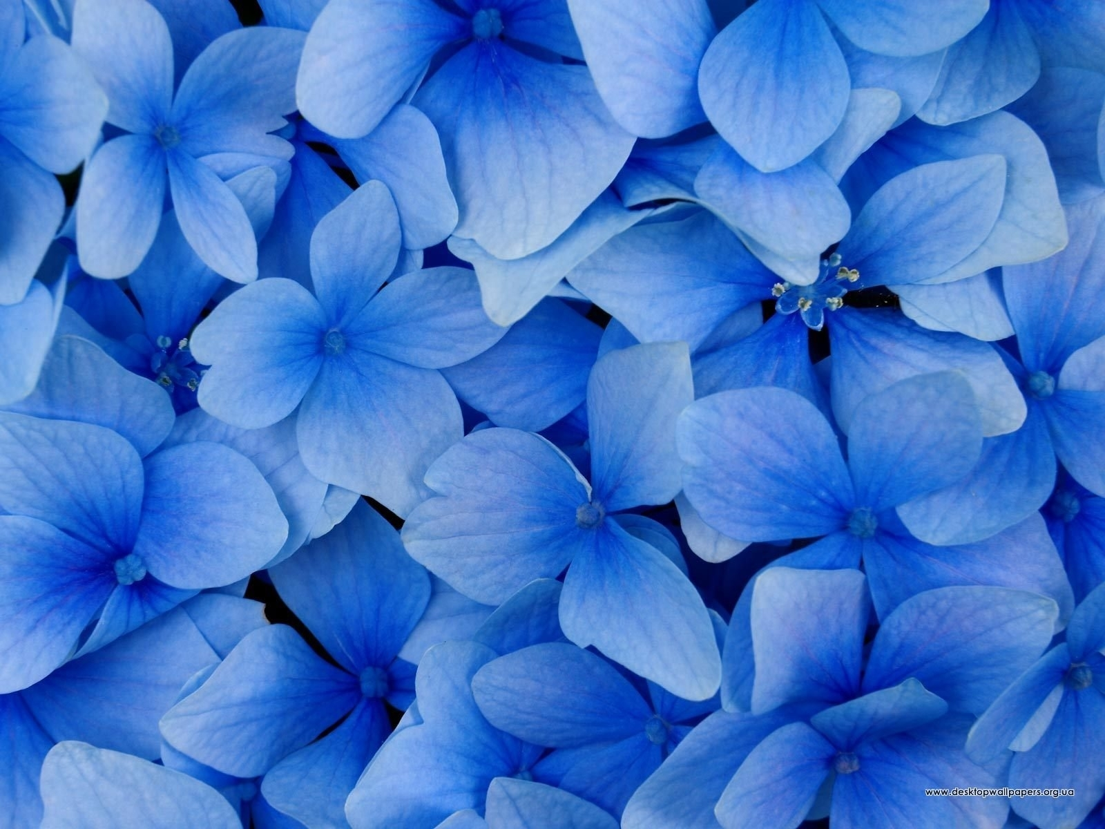 3011 скачать обои Растения, Цветы, Фон - заставки и картинки бесплатно