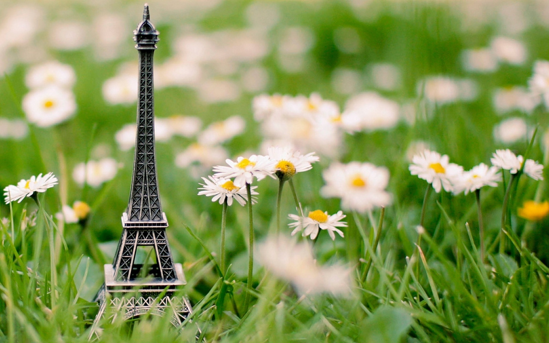 45272 download wallpaper Plants, Landscape, Flowers, Camomile, Eiffel Tower screensavers and pictures for free