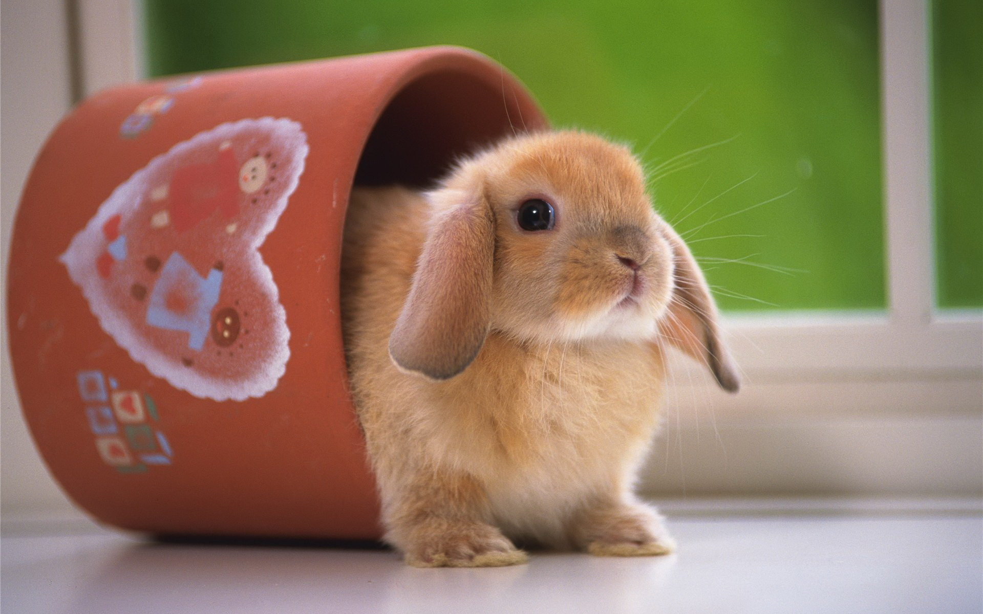 39949 Screensavers and Wallpapers Rodents for phone. Download Animals, Rodents pictures for free