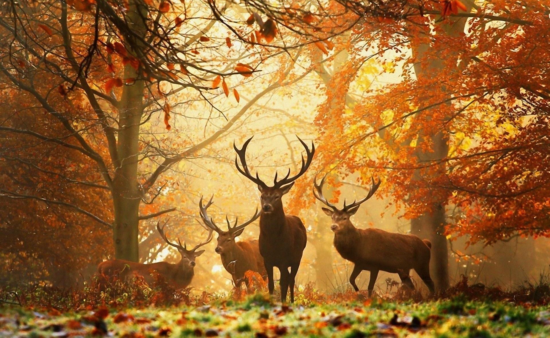 134274 завантажити шпалери Осінь, Тварини, Дерева, Трава, Листя, Олені - заставки і картинки безкоштовно