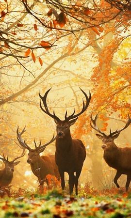 134274 download wallpaper Animals, Deers, Grass, Leaves, Autumn, Trees screensavers and pictures for free