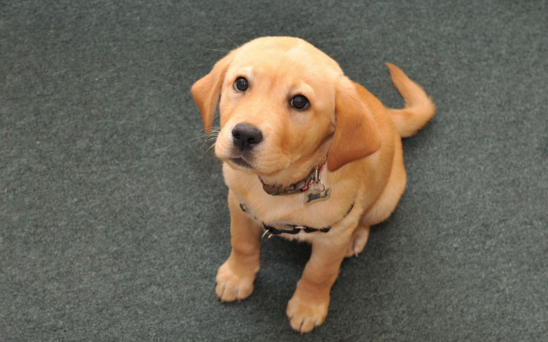 97974 download wallpaper Animals, Puppy, Muzzle, Small, Sit screensavers and pictures for free